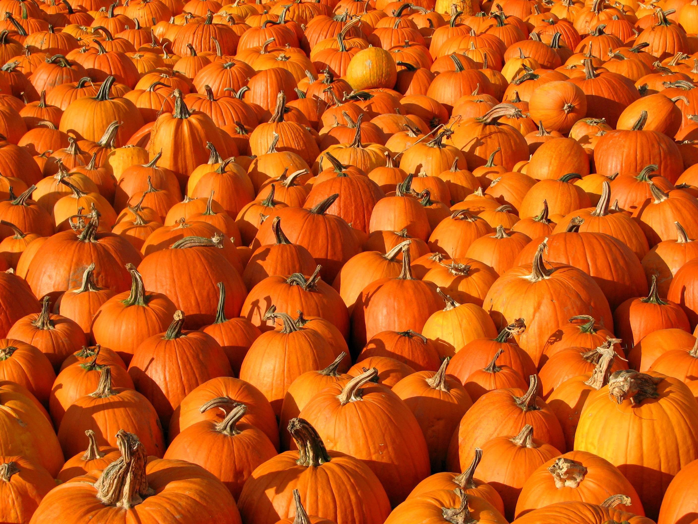 Klar til efterårets Halloween?